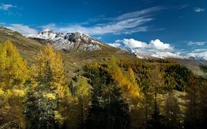 Zell am See, Salisburgo, Austria, Alpi, Zell am See, Salisburgo, Austria, Alpi, autunno, Montagne, alberi