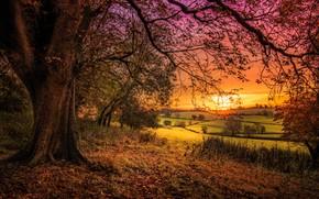 piękny zachód słońca, pole, drzew, krajobraz