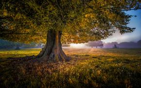 sunset, field, trees, fog, landscape