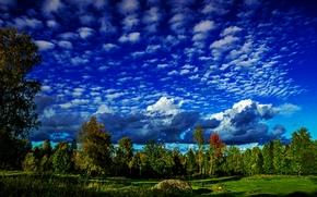 campo, árvores, céu, Nuvens, paisagem