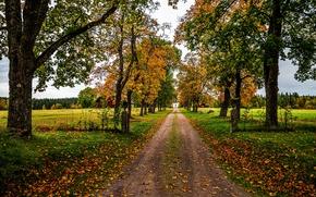 outono, estrada, árvores, campo, casa, paisagem