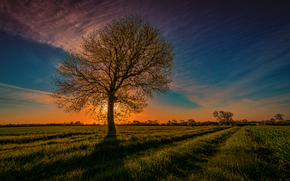 tramonto, campo, stradale, paesaggio albero