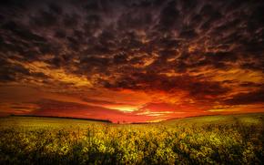 美丽的夕阳, 场, 花卉, 景观