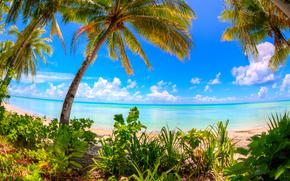 laguna, Abaiang Atoll, Kiribati, mar, Palms, costa, paisaje