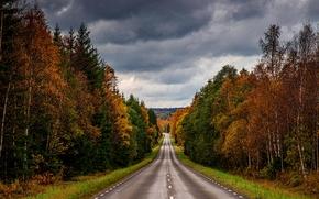 осень, дорога, тучи, лес, деревья, пейзаж