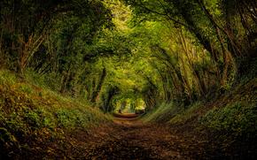 las, droga, drzew, krajobraz