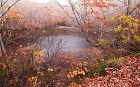осень, река, деревья, природа