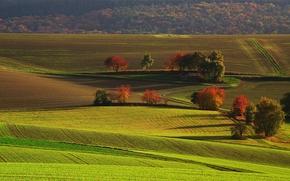 autunno, campo, Colline, natura