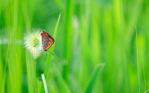 бабочка, трава, макро