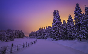 sunset, winter, snow, trees, fence, landscape