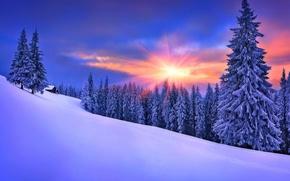 inverno, tramonto, nevicata, alberi, domestico, paesaggio