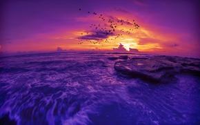 sunset, sea, Rocks, flock of birds, landscape