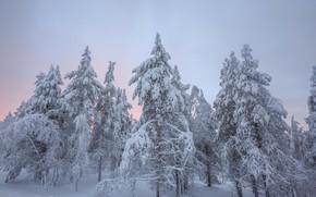 zima, zachód słońca, śnieg, drzew, Finlandia, krajobraz