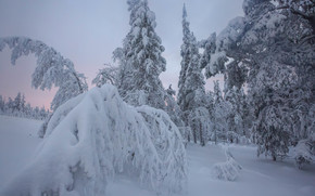 hiver, coucher du soleil, neige, arbres, Finlande, paysage