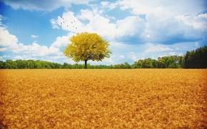 поле, колосья, дерево, стая птиц, пейзаж, осень