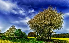 campo, árvores, céu, paisagem