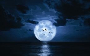 sea, night, moon, clouds, flock of birds, landscape