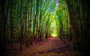 floresta, árvores, estrada, natureza
