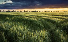 tramonto, campo, paesaggio