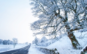 Greenhow Hill, North Yorkshire, UK, road, winter, trees, landscape