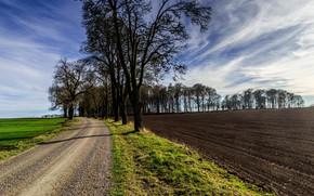 campo, arável, estrada, árvores, paisagem