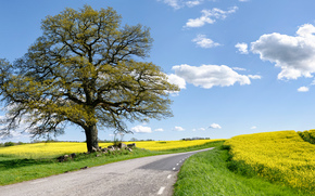 road, field, Flowers, tree, landscape