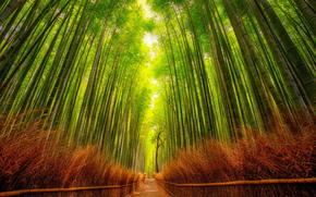 Bamboo Forest, road, landscape