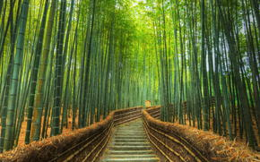 Bamboo Forest, road, stage