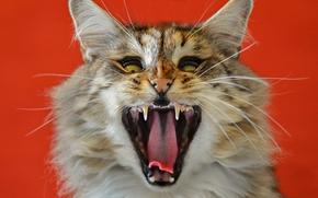 beast, COTE, cat, Snout, jaws