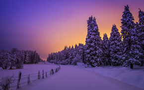 Snowy Night Lights, Otzarreta Forest, Basque Country, Spain