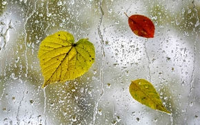 glass, drops, drops on the glass, wet glass, TEXTURE, autumn leaves on the glass
