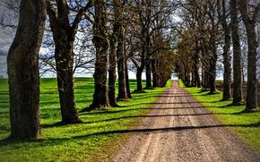 estrada, árvores, campo, paisagem