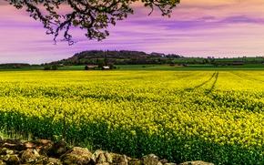 pôr do sol, campo, Flores, casa, galhos de árvores, paisagem