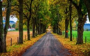 outono, estrada, campo, árvores, paisagem
