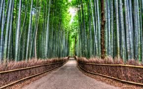 Bamboo Road, бамбуковый лес, дорога