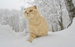 gatto, inverno, nevicata