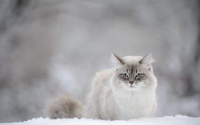 猫, 视图, 雪