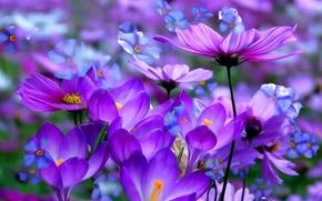 Flores, 3d, arte, fondo