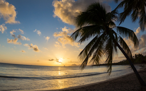 sunset, sea, shore, palm, landscape