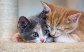 Kittens, kids, couple