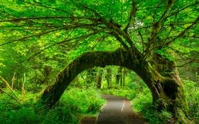 森林, 树, 道路, 树牌坊, 性质