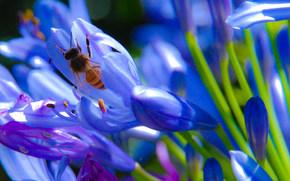 Flowers, wasp, Macro