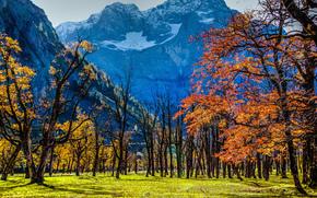Ahornboden situato nel centro di Karwendelgebirge 1200 metri sul livello del mare in Risstal in Austria, Fa parte del Tirolo, Paesaggio bavarese, natura, riserva, Ci sono in crescita di 2.500 aceri