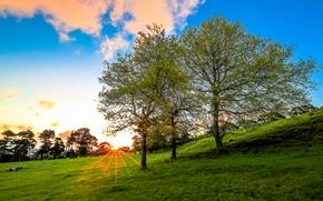pole, Hills, drzew, krajobraz
