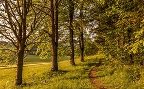 поле, лес, тропинка.деревья, пейзаж