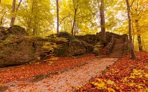 autumn, park, road, trees, stage, landscape