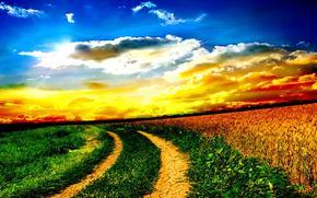 日没, フィールド, 道路, 風景