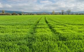 field, grass, HORIZON, landscape