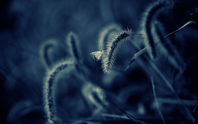 erba, farfalla, Macro