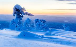 日落, 冬天, 雪, 漂移, 树, 景观